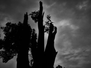 白黒の風景写真