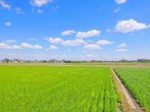 麦畑と青空の写真